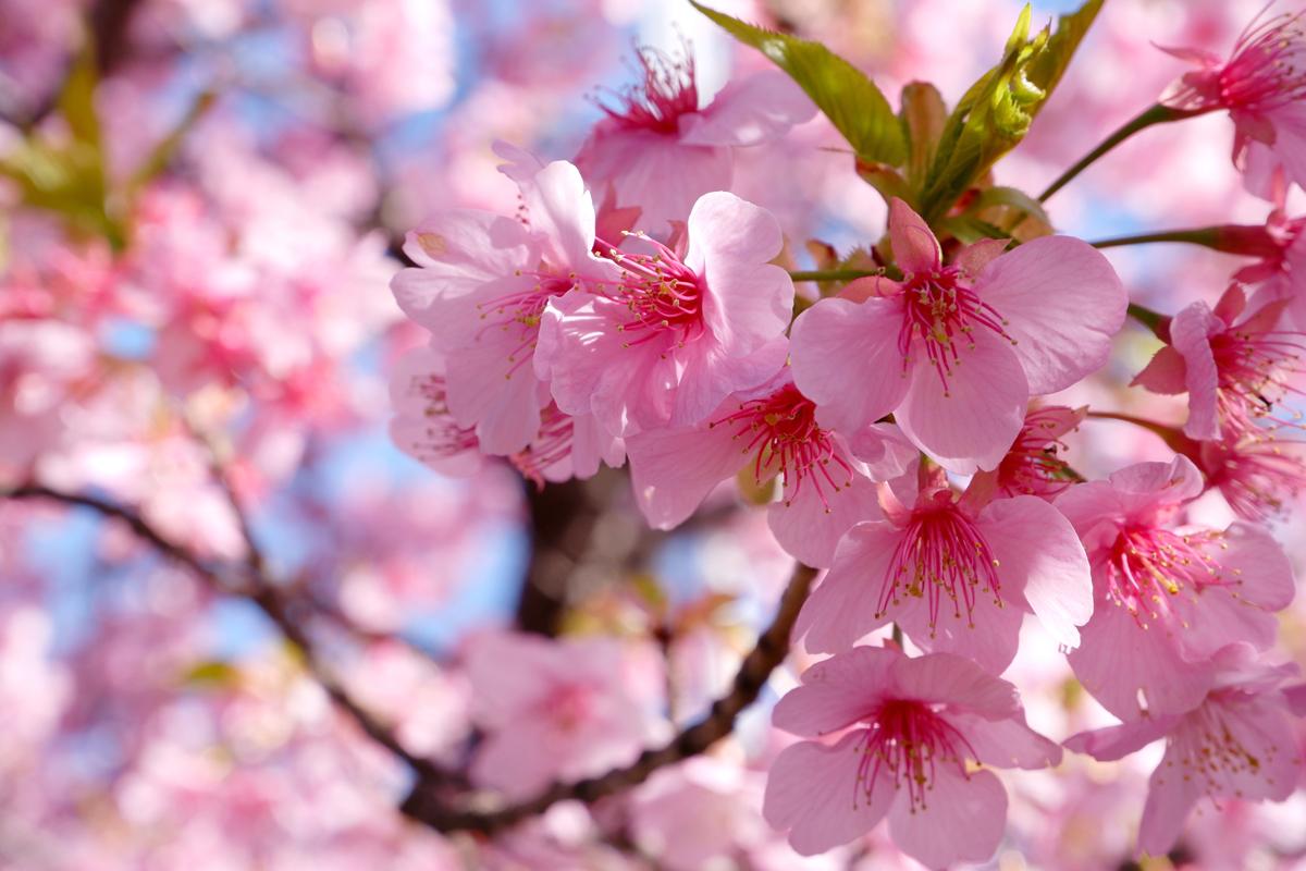 Die Jahreszeiten in Japan: die beste Zeit für euren Urlaub