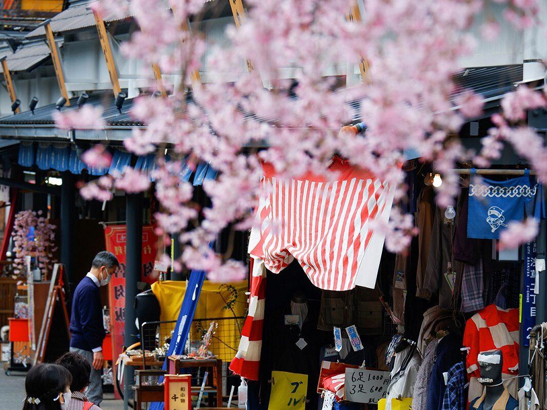 Hanami Impressionen 2021: die Vergänglichkeit der Kirschblüten