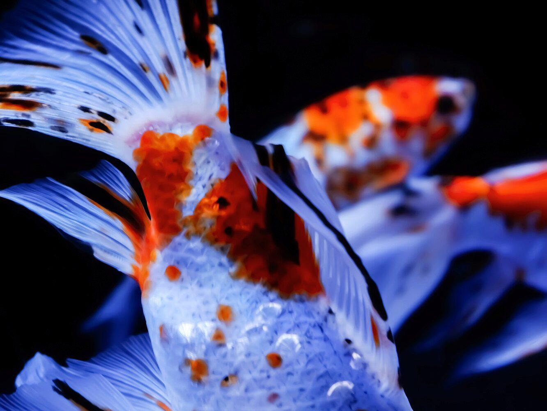 Ein entspannter Tag im Sumida Aquarium