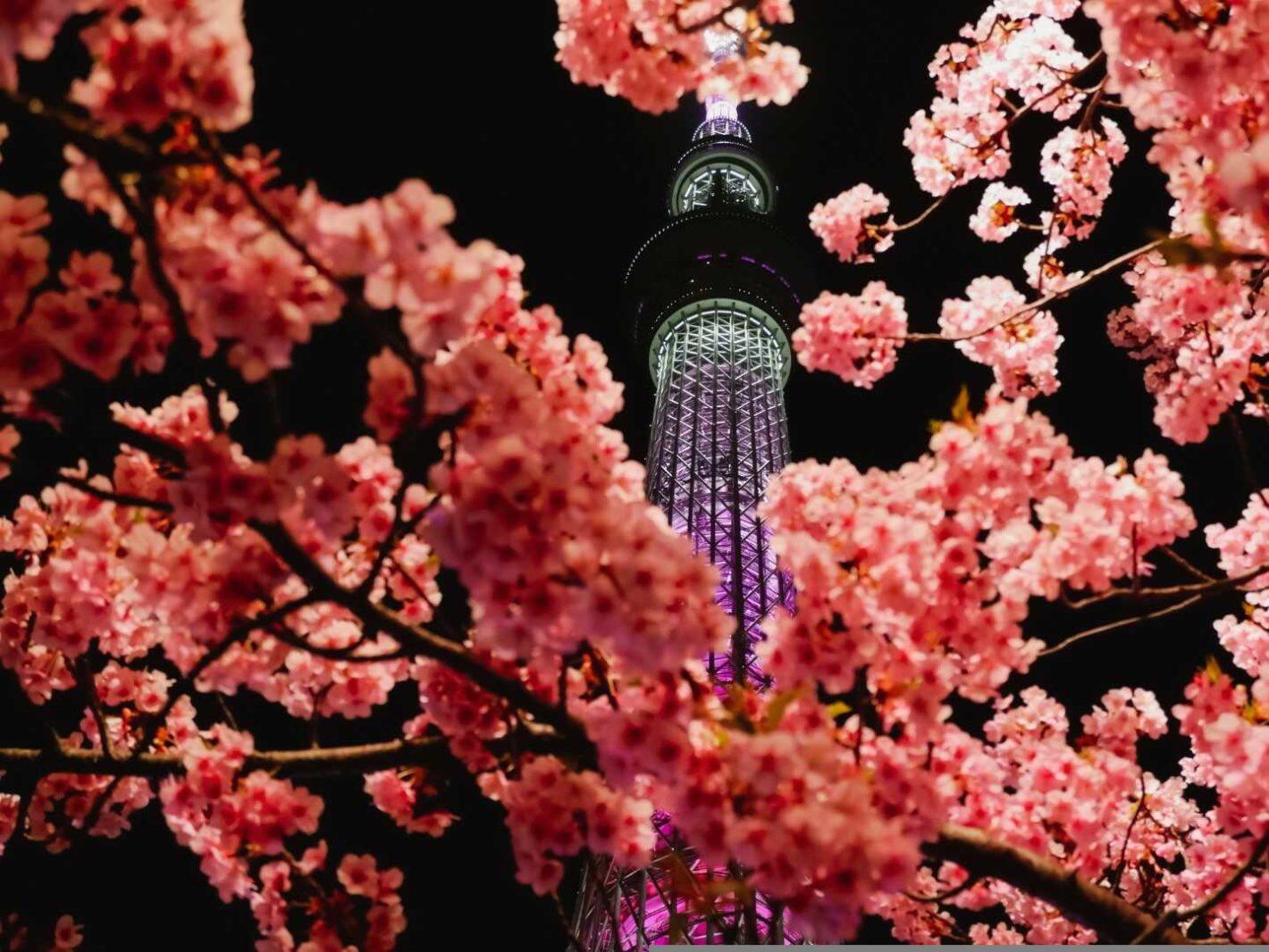 Vielseitiges Tokyo: Sumida